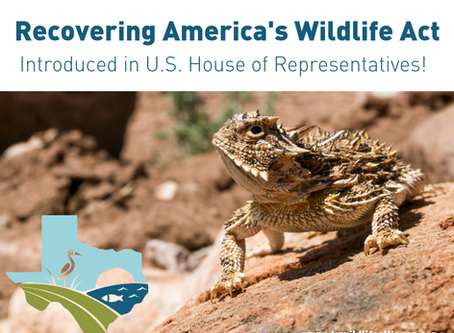 Recovering America's Wildlife Act Introduced in Congress!