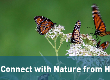 Connect with Nature from Home