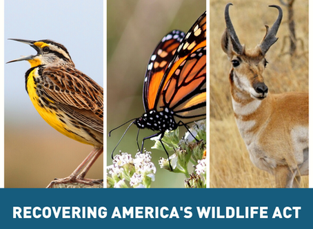 Recovering America's Wildlife Act News