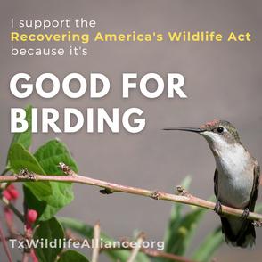 RAWA Good for Birding.png