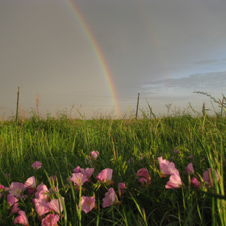 Rainbow_on_the_Katy_Prairie_-_Photo_Cred