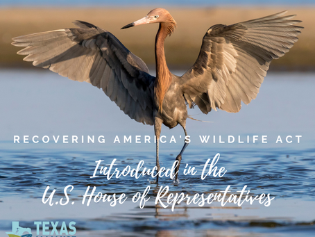 For Immediate Release: Bipartisan Bill to Help Declining Wildlife Introduced on Earth Day