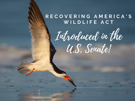 Recovering America's Wildlife Act Introduced in the U.S. Senate!