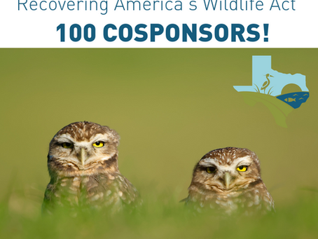 Recovering America's Wildlife Act Reaches 100 Cosponsors!