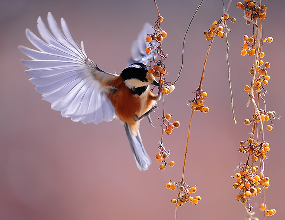 Bird and Berries.png