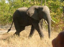 Africa SML 30