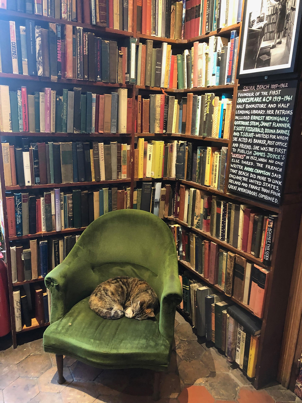 Aggie cat at Shakespeare & Co.