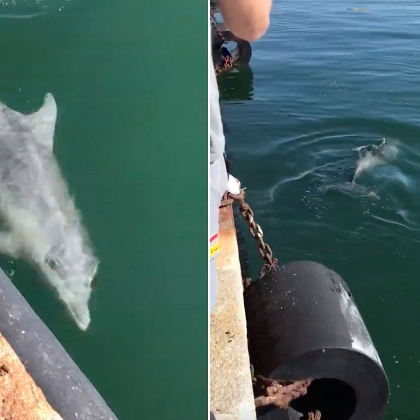 Dolphins in Venice ports
