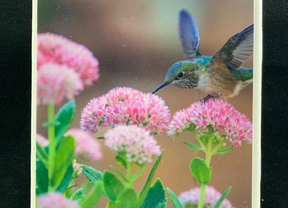 Tile Coasters - Hummingbird