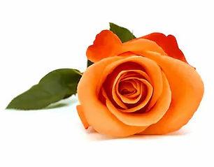 bunch-rose-flower-on-white-260nw-1352233553_edited.jpg