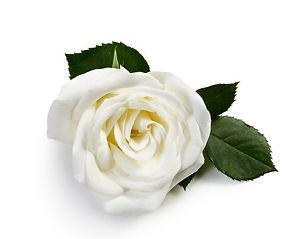 stickers-white-rose.jpg.jpg