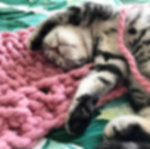 Stampy cat asleep on chunky pink crochet yarn