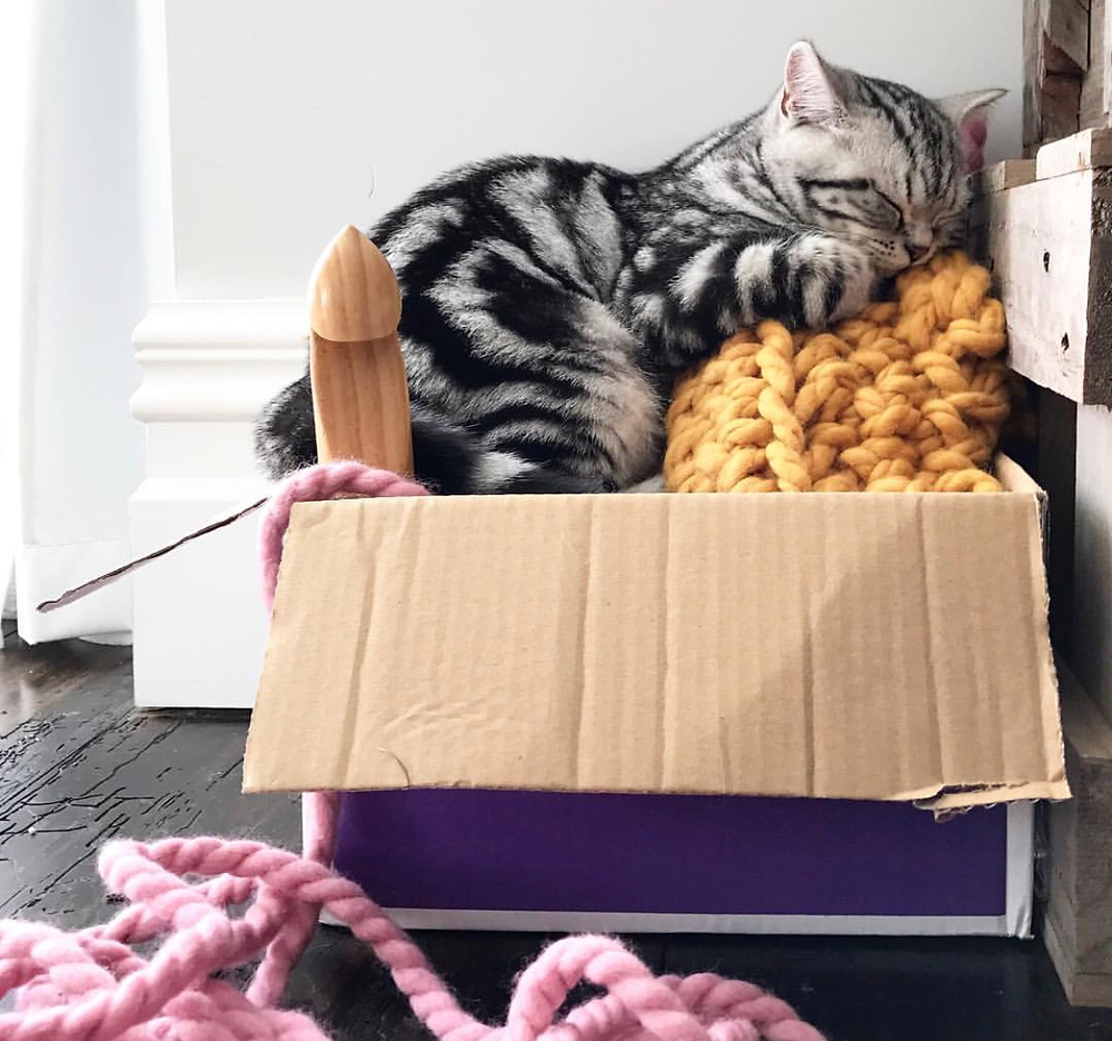 Stampy cat asleep in box of yarn and crochet