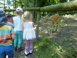 Meeting & feeding the Fallow deer