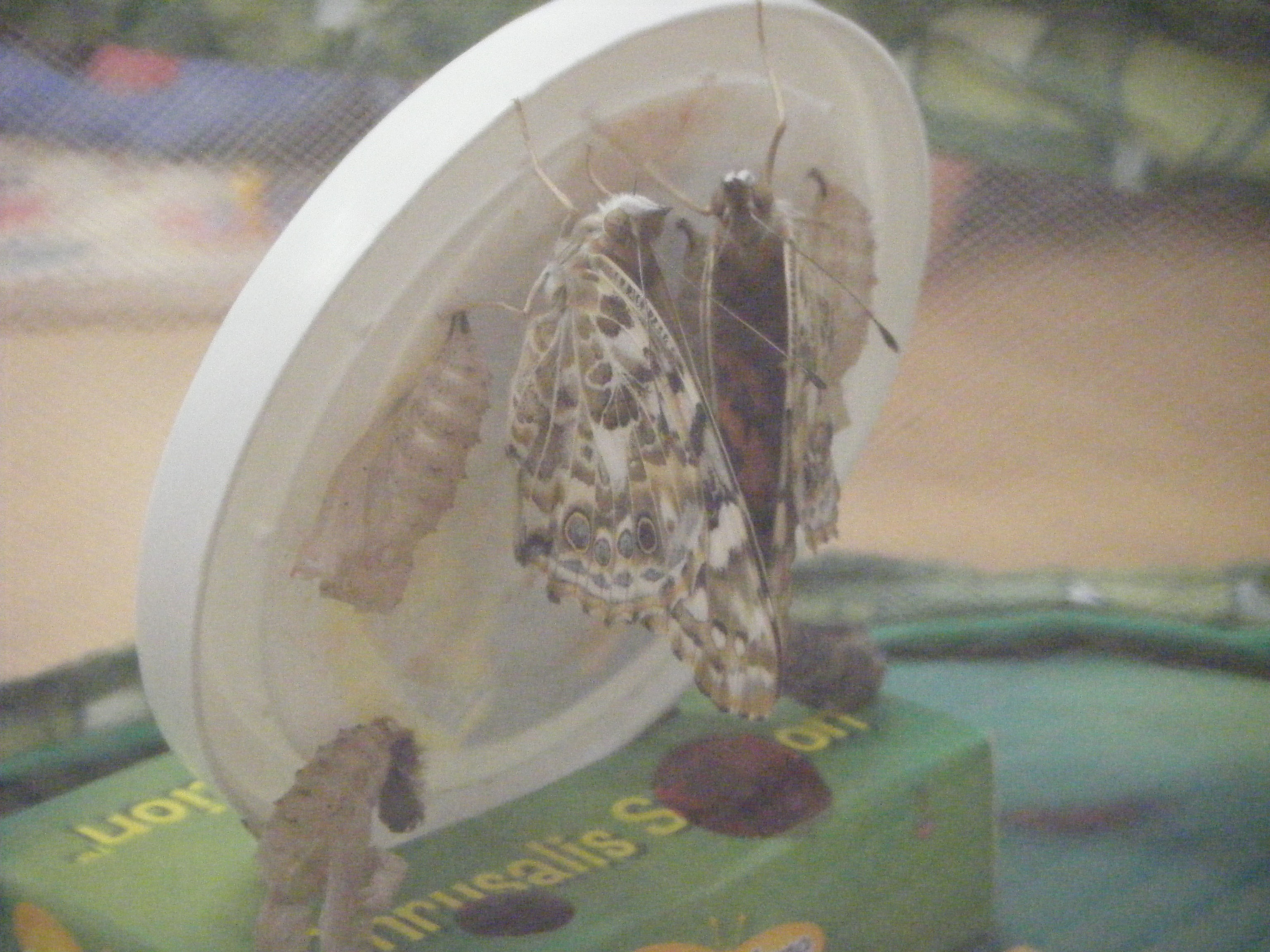 Hatching into beautiful butterflies