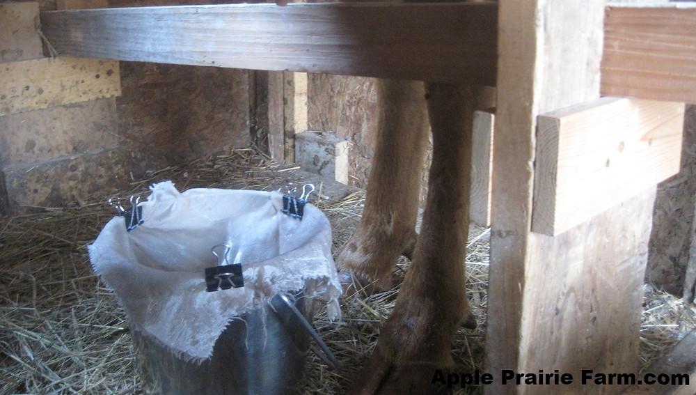 milk stall