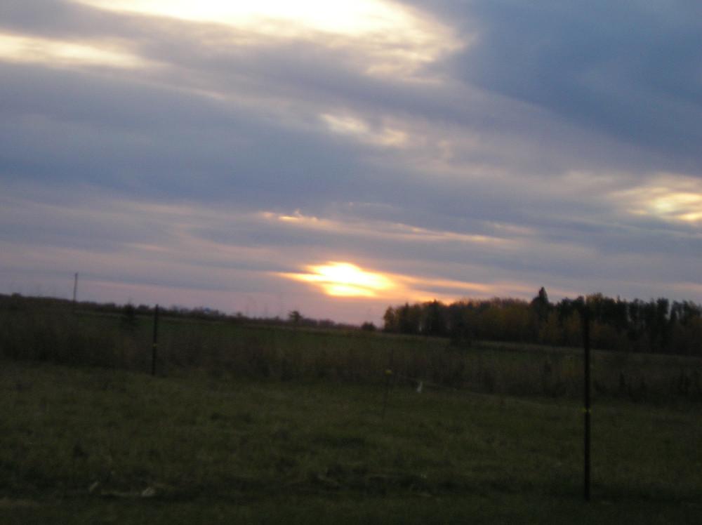 Apple Prairie Farm, mob stocking, rotational grazing