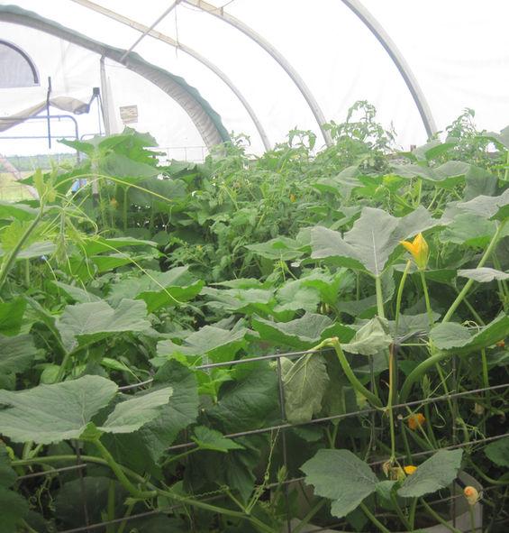 green house, squash
