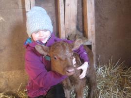 Irish Dexter Bull Calf