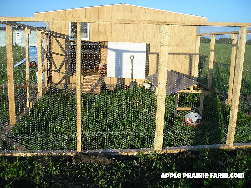 Apple Prairie Farm, chickens, hen house, chicken coop