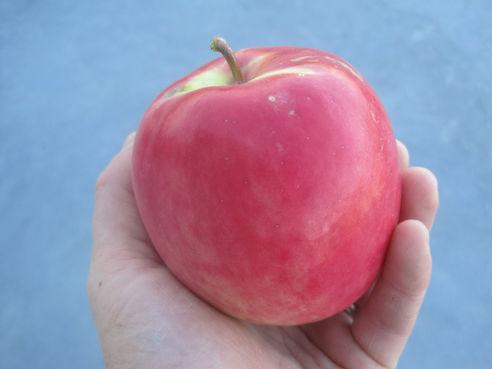 Norland Apple, Apple Prairie Farm