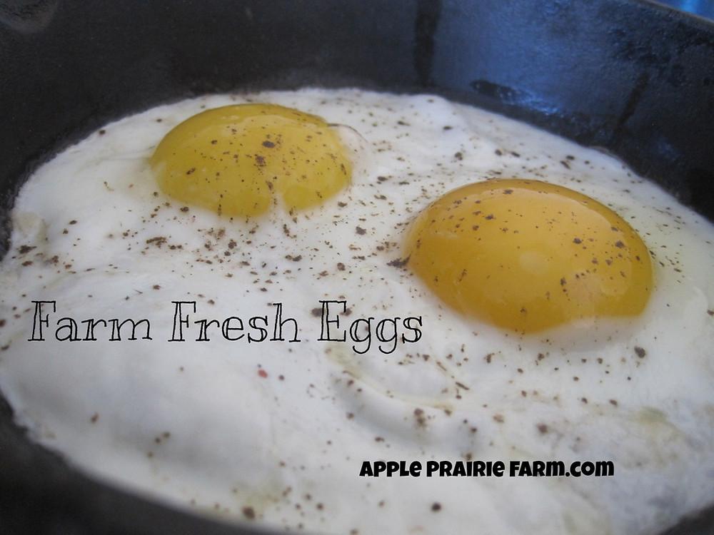 fresh eggs, homestead foods, chickens, hens