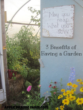 3 Benefits of Having A Garden