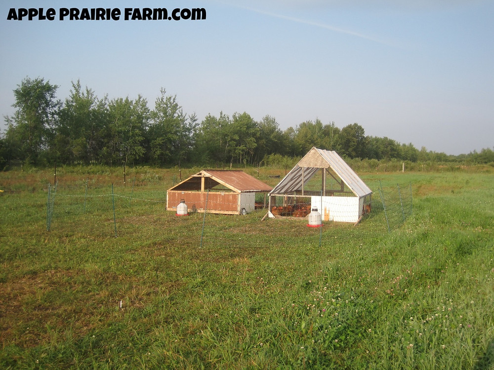Apple Prairie Farm, Pastured chickens, Freedom Rangers, chicken tractors, broilers, rotational grazing
