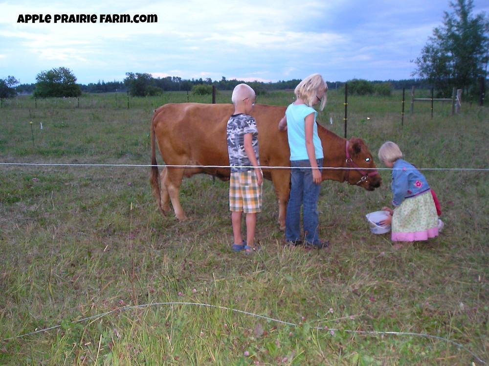 Irish Dexter milk cow with young children