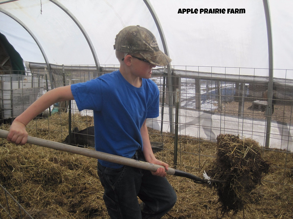 Apple Prairie Farm, cleaning the greenhouse, working together