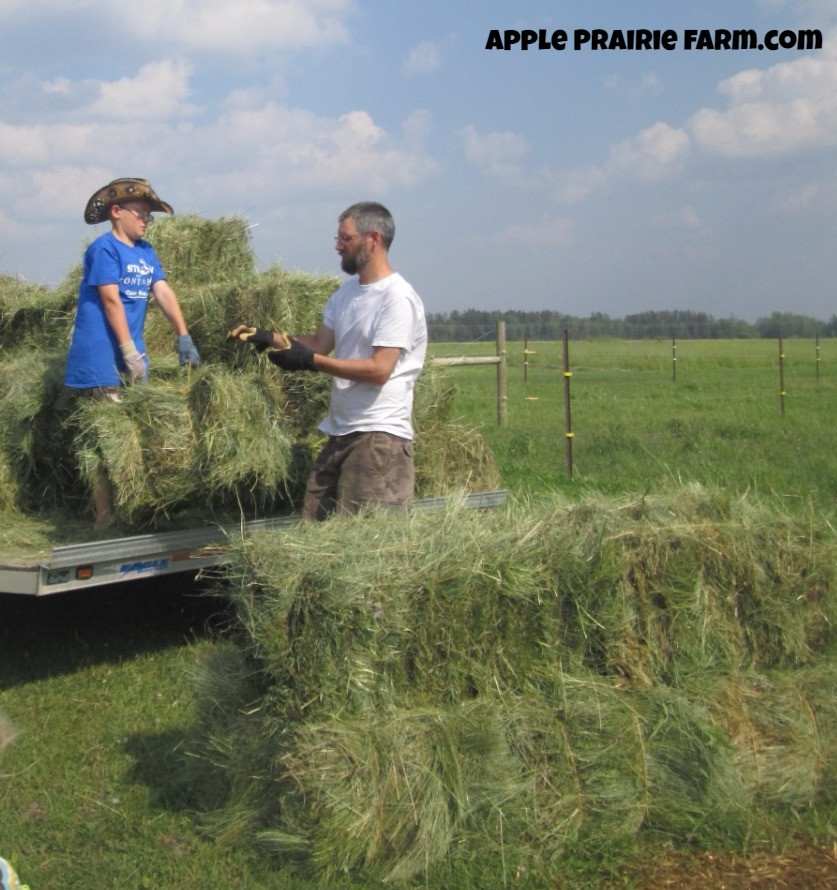 Apple Prairie Farm, Hay bales, working together