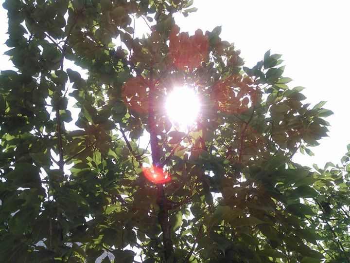 久しぶりの太陽。日差しが、眩しかった!