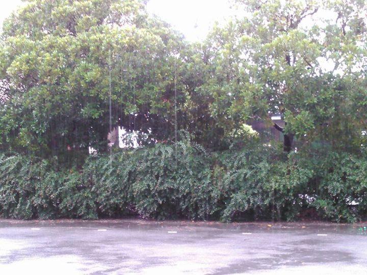 今日は、大粒の雨でした。