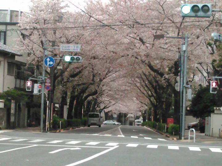 Facebook - 今日は、品川区小山台の桜です。