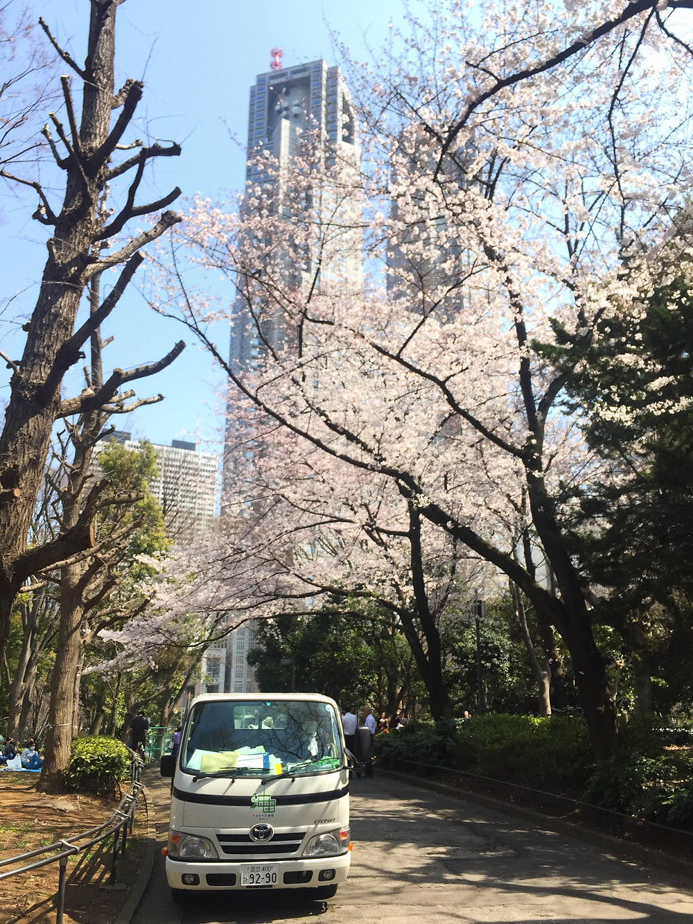 2015年桜.JPG