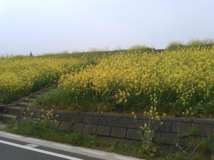 Facebook - 流山、江戸川沿いの土手です。