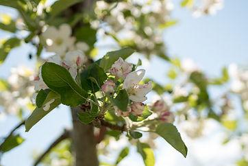 fioritura 2.jpg
