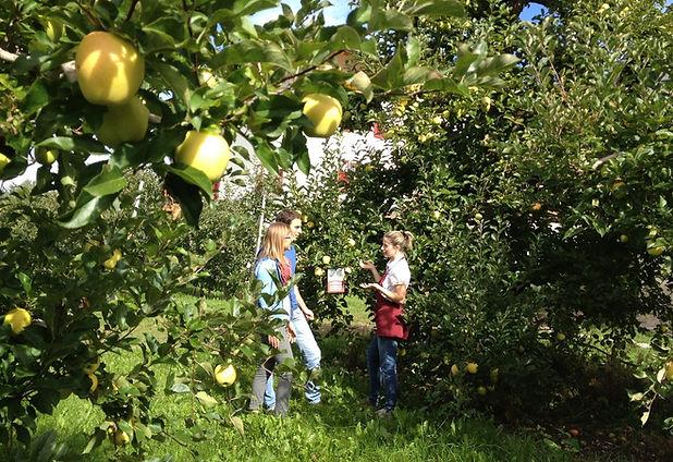 autunno-val-di-non-raccolta-mele-adotta-un-melo-ph-marco-simonini-36-.jpeg