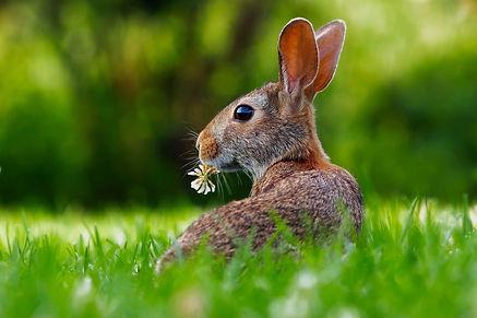 rabbit-1903016_1920_edited.jpg