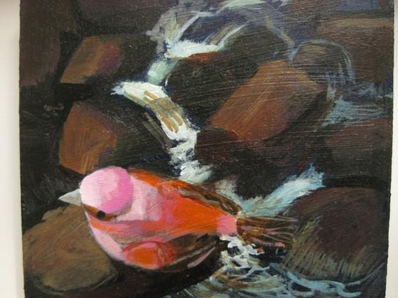 River bird