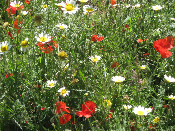Almuna garden