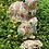 Thumbnail: Garden Decorations Outdoor Frog Ornaments