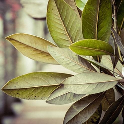 Tobacco & Bay Leaf - Soy Candle