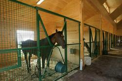 Custom Horse Stall
