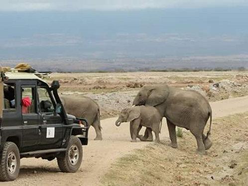 Safari 3 giorni /2 notti Tsavo Est - Amboseli