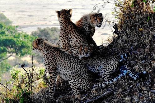 Safari 2 giorni/1 notte Masai Mara con volo aereo