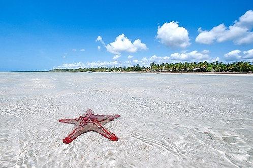 Isola di Lamu
