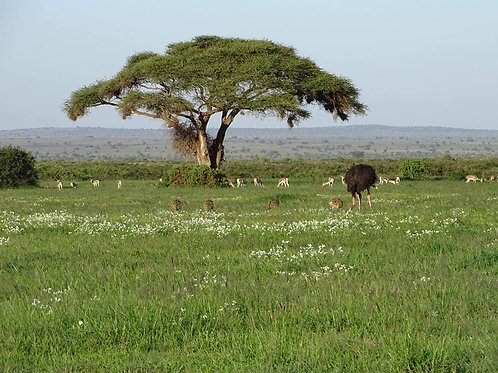 Safari 4 giorni/3 notti Tsavo Est - Amboseli - Tsavo Ovest