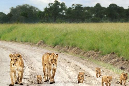 Safari 2 Giorni /1 Notte Tsavo Ovest