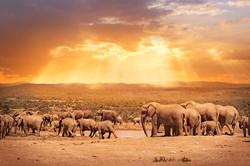 Kenya-Safari-2